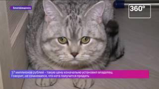 Кота-экстрасенса продали за 5 миллионов рублей