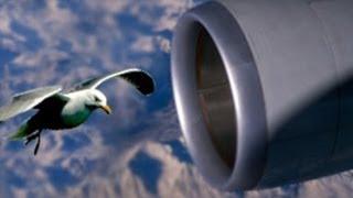 Southwest Airlines jet lands safely after bird strike