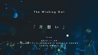 The Winking Owl - 片想い - Official Live Clip