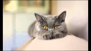 Корма для кошек вискас оптом