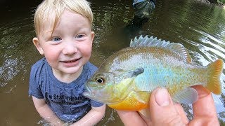 Fishing Mystery Creek - 7 Species on Flies - Micro fishing with Bait & Flies