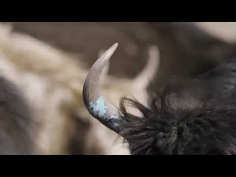 Plateau to Product: The Khunu Story of Yaks, Nomads and Wool