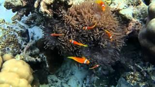 2014.3.13~24 モルディブ アリ環礁 ランヴェリビレッジのハウスリーフ...