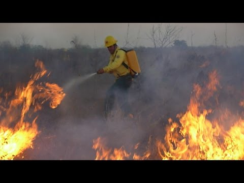 Curso Formação e Treinamento de Brigada de Incêndio Florestal - Curso de Brigadista