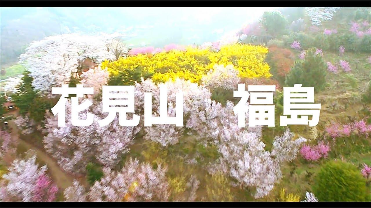 【空の旅#63】「さくらの山・満開!その2」空撮・多胡光純 花見山公園_Fukushima aerial
