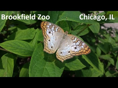 Brookfield Zoo Walkthrough