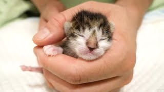 Protected baby kittens of abandoned cats one day after birth . Kittens grow from 150 days old