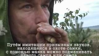 На самца косули с манком(, 2010-12-31T10:18:48.000Z)
