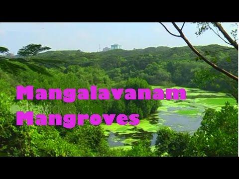 Mangalavanam Mangroves, Ernakulam