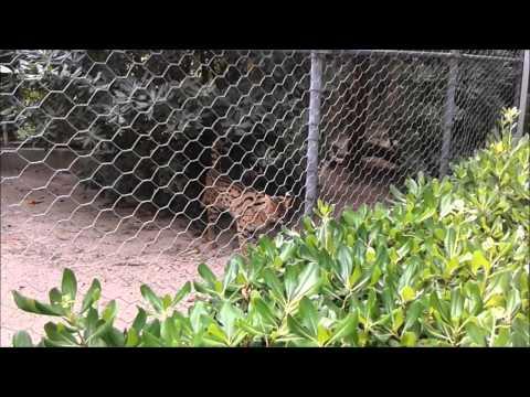 Italia - Parco Zoo Punta Verde