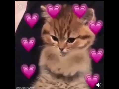 Wholesome Cat Meme