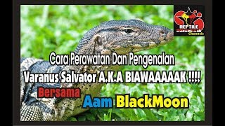 Video Cara Perawatan & Pengenalan Varanus Salvator (BIAWAK) With Kang Aam(MRC) download MP3, 3GP, MP4, WEBM, AVI, FLV September 2018