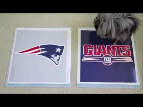 Dog predicts Giants to win 2012 Super Bowl XLVI by pooping