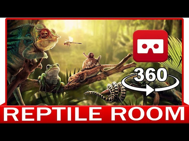 360° VR VIDEO - REPTILE ROOM - DISCOVERY NATURE & ANIMAL - VIRTUAL REALITY 3D