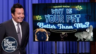 Why Is Your Pet Better Than Me?: Golfing Cat, JengaPlaying Dog   The Tonight Show