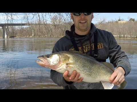 GIANT Mississippi River Walleye - Pool 2 MN