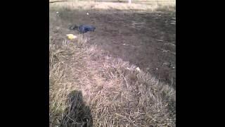 Охотники на алкашей (фильм 1 часть 1)