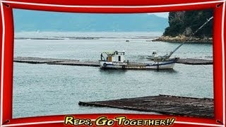Oyster farming in Japan: A great spot of the world(Hiroshima)