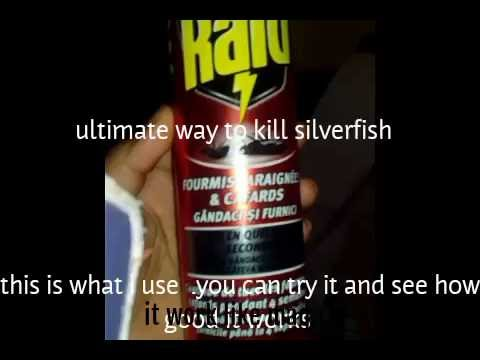 How To Kill Silverfish One Way