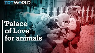 A Palace of Love for Turkey s stray animals