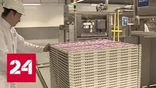 Завод по производству кормов пополнит бюджет Ростовской области на миллиард рублей в год - Россия 24