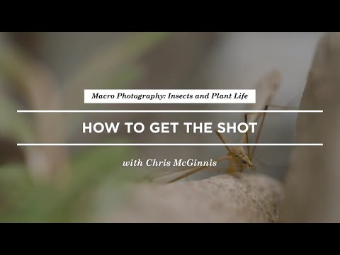 how-to-shoot-macro-photography-of-insects-with-chrismcginnis- -creativelive