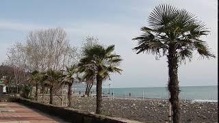 Чудесного дня и отличного настроения Пальмы и море