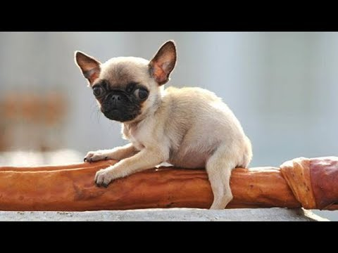 Cute is Not Enough - Funny Cats and Dogs Compilation #93