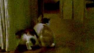 заяц + кошка =зайцокошке
