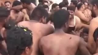 Bataille de bouse de vache|CCTV Français