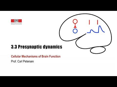 3.3 Presynaptic dynamics
