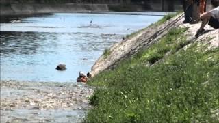 26日、京都、鴨川で人が川から出れなくなっていて、レスキュー隊、救...