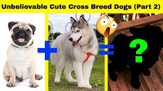 Unbelievable Cute Cross Breed Dogs (Part 2)
