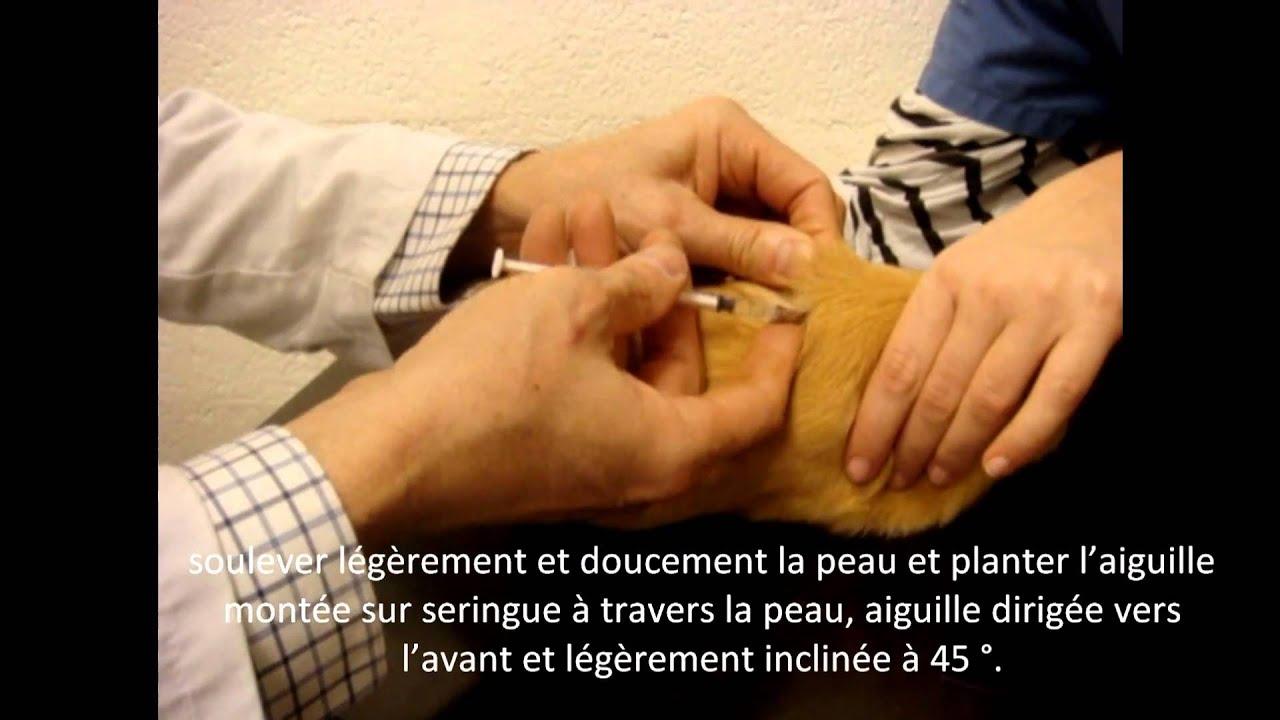 Comment faire une injection sous cutan e un cochon d - Comment plastifier une photo ...
