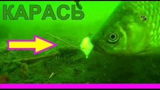 Пытался ловить карася поплавочной удочкой :) Рыбалка. Ловля карася на поплавок. fishing(Хронология поклевки одного сошедшего карася на поплавочную удочку :))) Подводная съемка. На этом водоеме..., 2014-07-20T09:49:12.000Z)