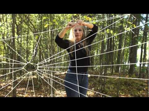 Why do spiders make webs