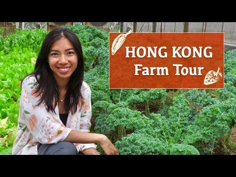 Hong Kong Farm Tour