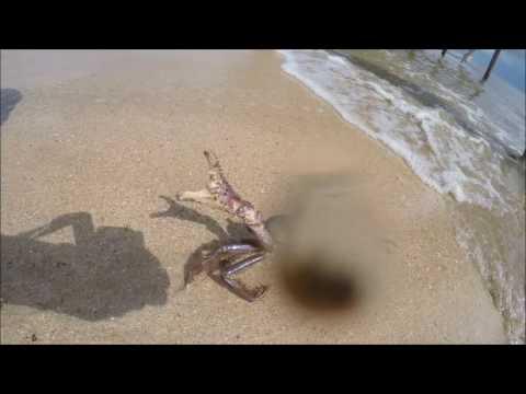 Zand rits west Suriname