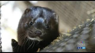 B.C. disease experts want an end to fur farming