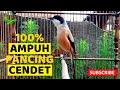 Masteran Cendet Trotol Full Tembakan Gacor Variasi Mewah  Mp3 - Mp4 Download