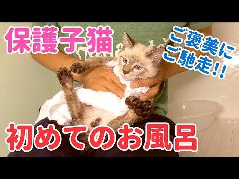 子猫初めてのお風呂!嫌がりながらも頑張ったご褒美にはウェットフード【恐怖のドライヤー】