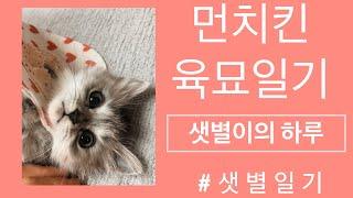 아기고양이 먼치킨 육아일기_샛별이의 하루1