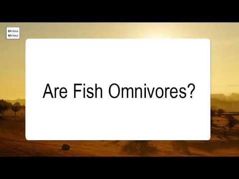 Are Fish Omnivores