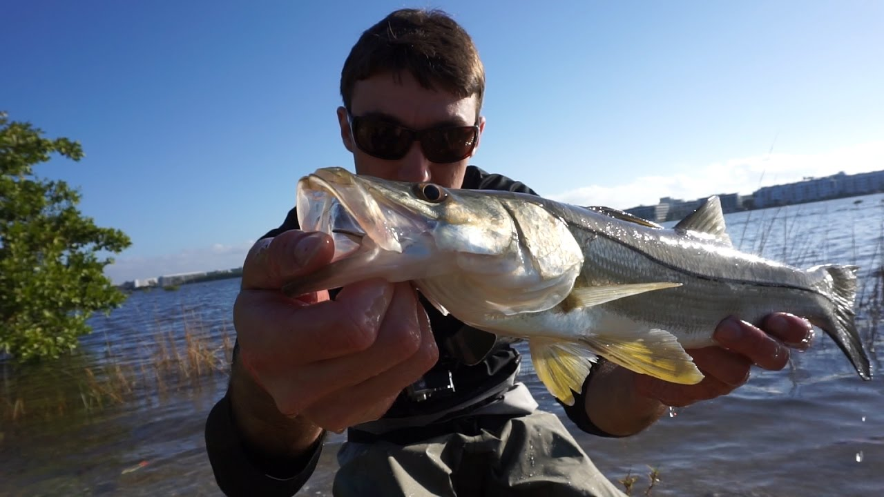 Crazy fish intracoastal snook fishing fl spring break ep for Crazy fishing videos