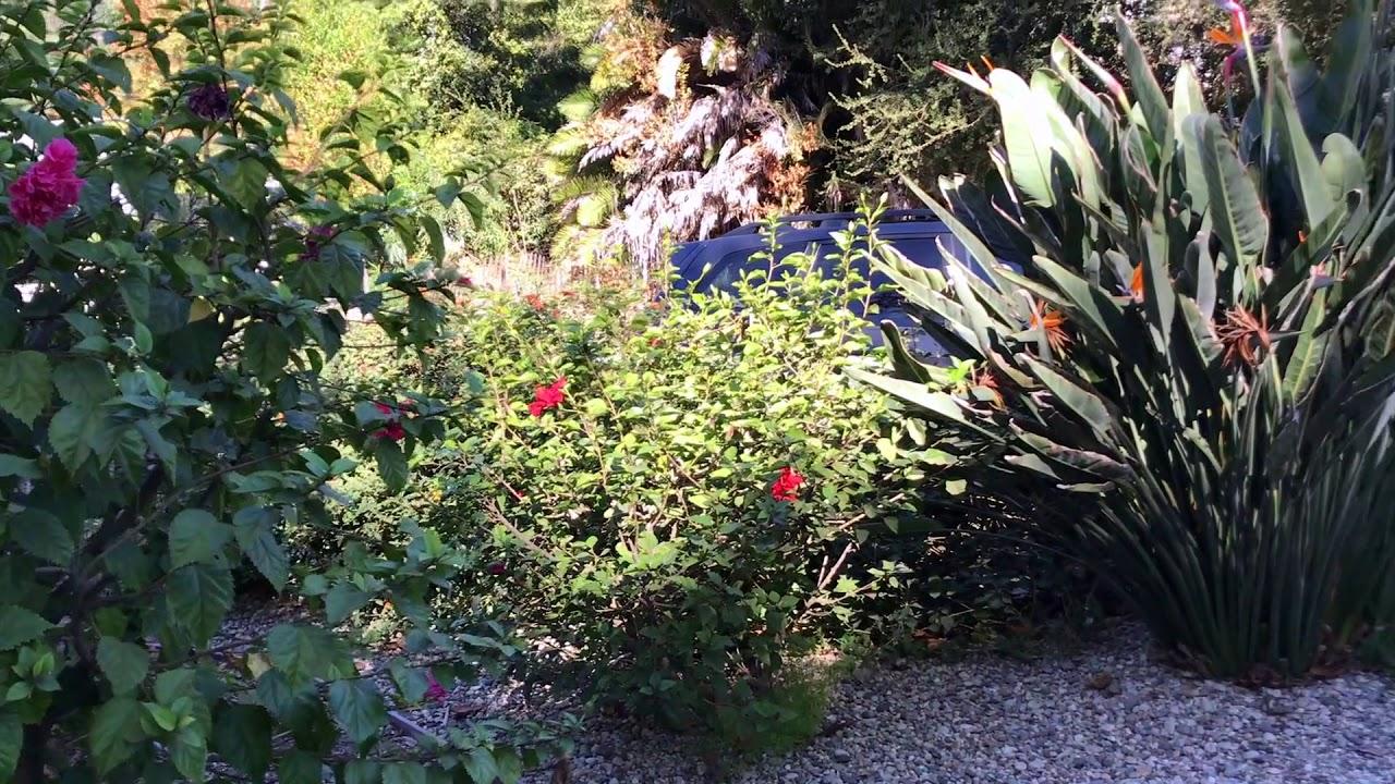 Dryscape Gardening!