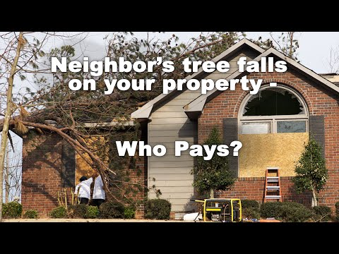 Your neighbor's tree falls on your house - who pays?