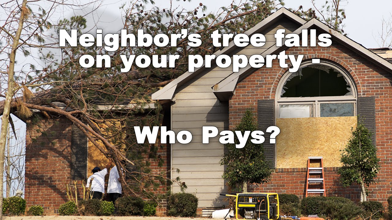 Your neighbor\u0027s tree falls on your house - who pays? - YouTube