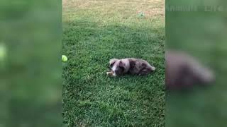 Funniest Dogs and Cats - Awesome and Funniest Animals Videos 2019  # 7
