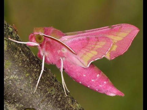 15 Pink Animals You Mi...