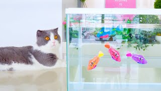 Cats Try Fishing!
